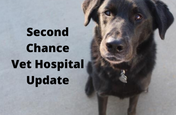 Important Update for Anyone Coming to Our Vet Hospitals