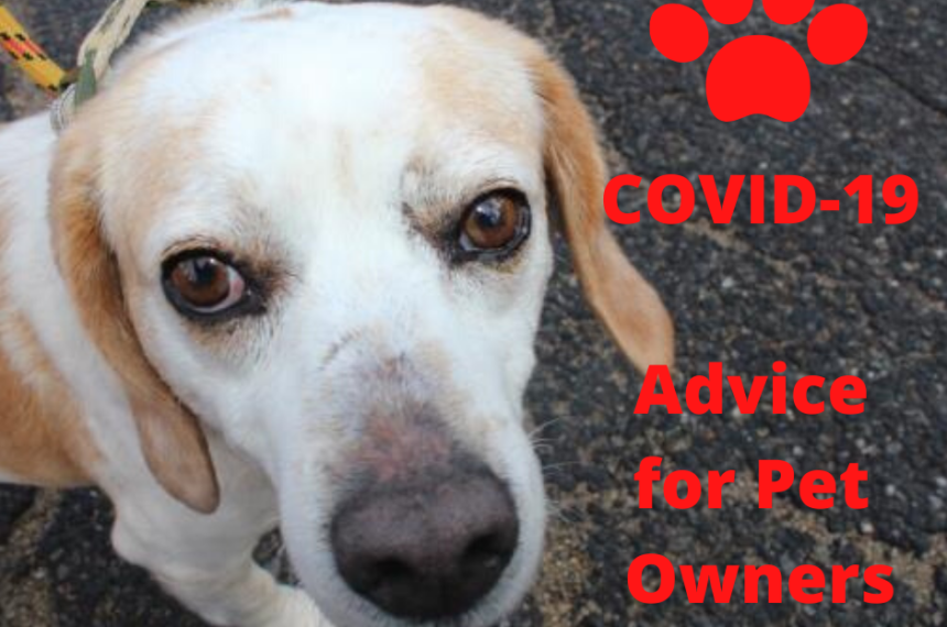 COVID-19 Advice for Pet Owners